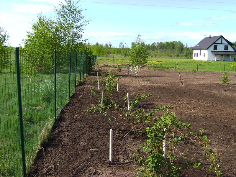 Vecu dārzu rekonstruēšana